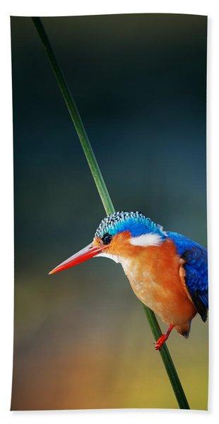 Malachite Kingfisher Beach Towel