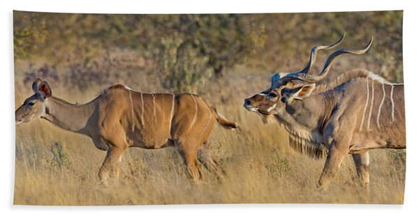 Male And Female Greater Kudu Beach Towel