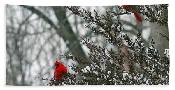 Male Cardinal Pair Beach Sheet