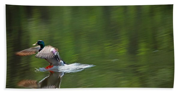 Mallard Splash Down Beach Towel
