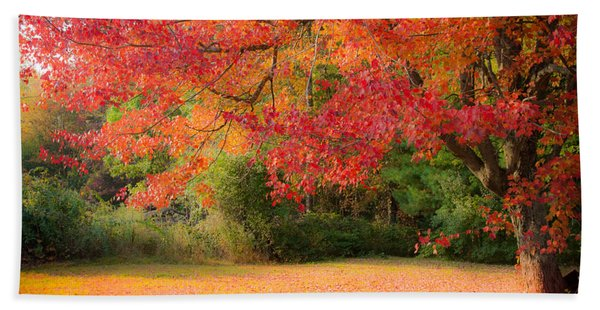 Beach Towel featuring the photograph Maple In Red And Orange by Jeff Folger