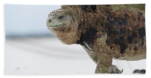 Marine Iguana Male Turtle Bay Santa Beach Towel