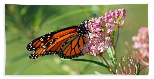 Monarch Butterfly On Milkweed Beach Sheet