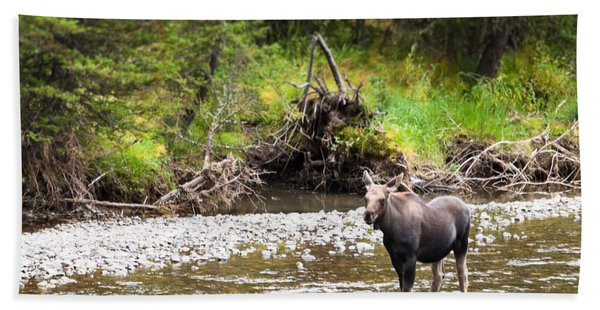 Moose In Yellowstone National Park   Beach Towel