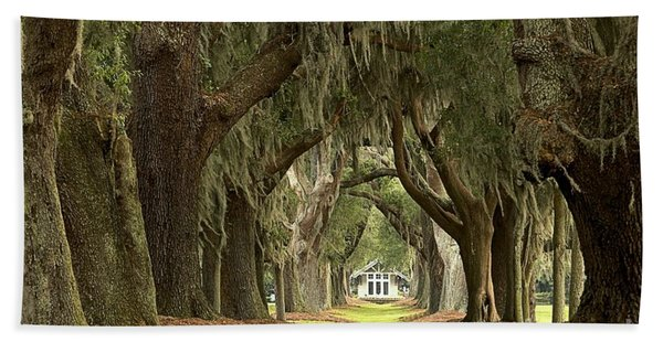 Oaks Of The Golden Isles Beach Towel