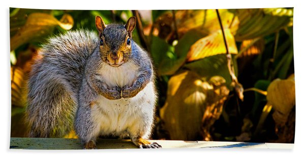 One Gray Squirrel Beach Towel