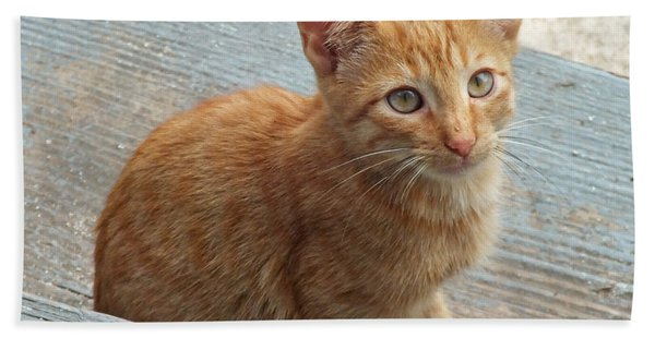 Orange Kitten 2 At The Front Porch Beach Sheet