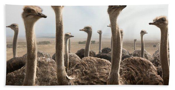 Ostrich Heads Beach Towel