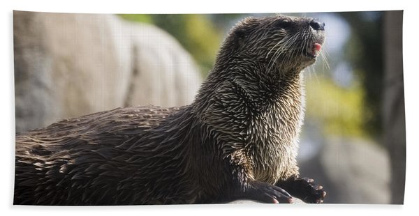 Otter Sun Bathing Beach Towel