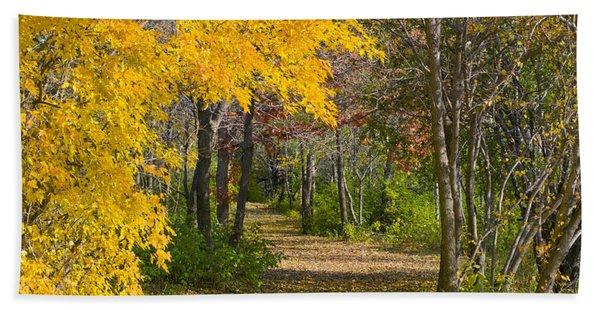 Path Through Autumn Trees Beach Towel