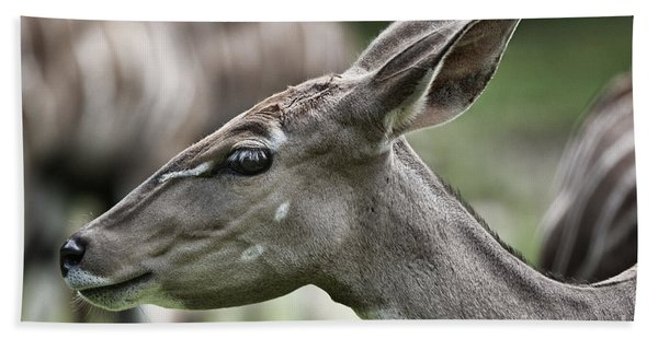 Portrait Of A Lesser Kudu Beach Towel