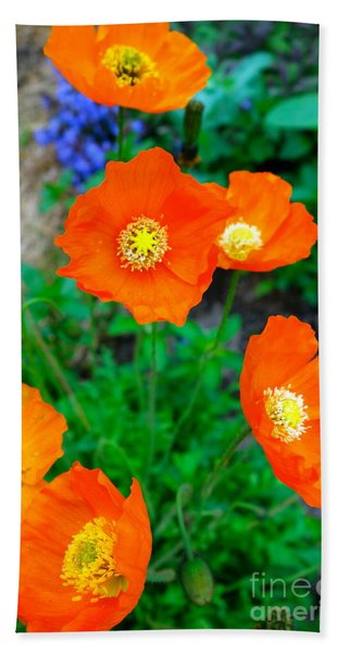 Beach Towel featuring the photograph Pretty In Orange by Jacqueline Athmann