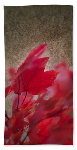 Beach Towel featuring the photograph Red Maple Dreams by Jeff Folger