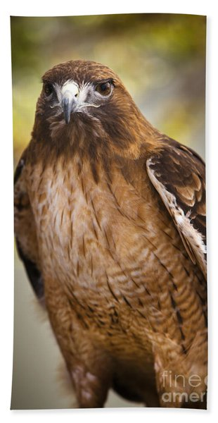 Beach Towel featuring the photograph Eyes Of The Raptor by David Millenheft
