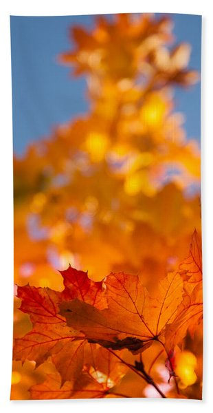 Beach Towel featuring the photograph Red Tipped Gold by Jeff Folger