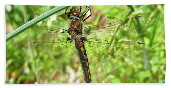 Resting Brown Dragonfly Beach Towel