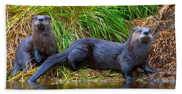 River Otters Beach Towel