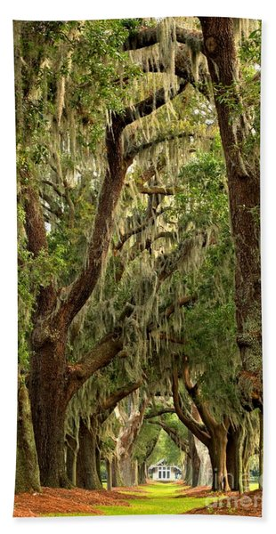Sea Island Oaks Portrait Beach Towel