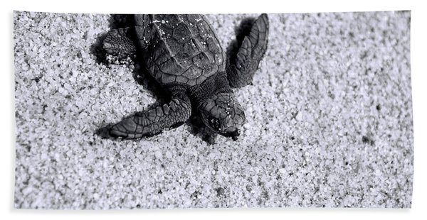 Sea Turtle In Black And White Beach Towel