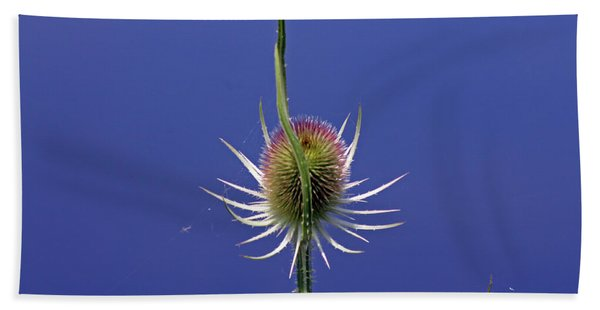Single Teasel Beach Towel