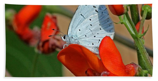Small Blue Butterfly Beach Towel