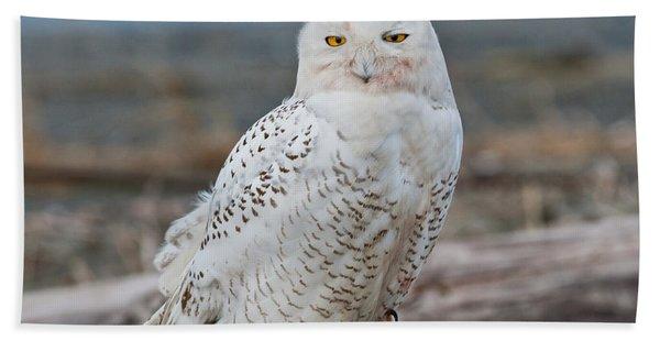 Snowy Owl Watching From A Driftwood Perch Beach Sheet