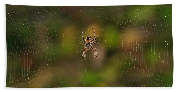 Spider Web Beach Sheet