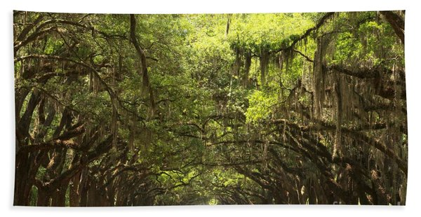 Splendid Oak Drive Beach Towel