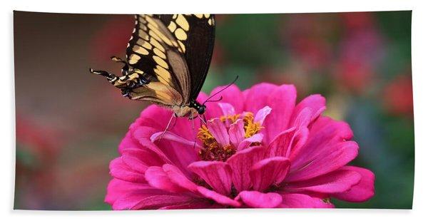 Swallowtail Butterfly Beach Sheet