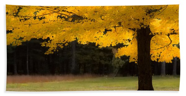 Beach Towel featuring the photograph Tree Canopy Glowing In The Morning Sun by Jeff Folger