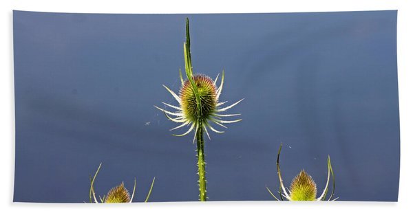 Trio Of Teasels Beach Towel