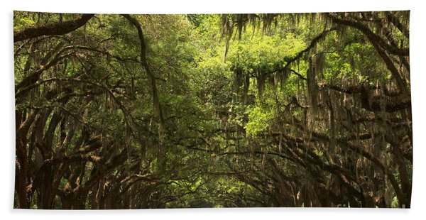 Under The Ancient Oaks Beach Towel