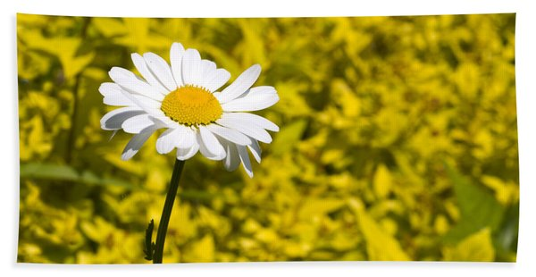 White Daisy In Yellow Garden Beach Towel