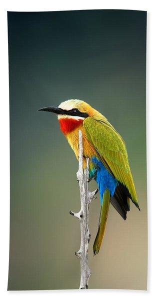 Whitefronted Bee-eater Beach Towel