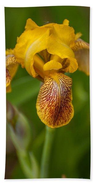 Yellow Bearded Iris Beach Towel