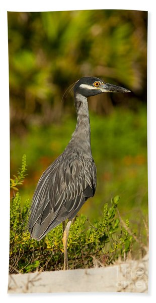 Yellow Crowned Night Heron Dune Watch Beach Towel