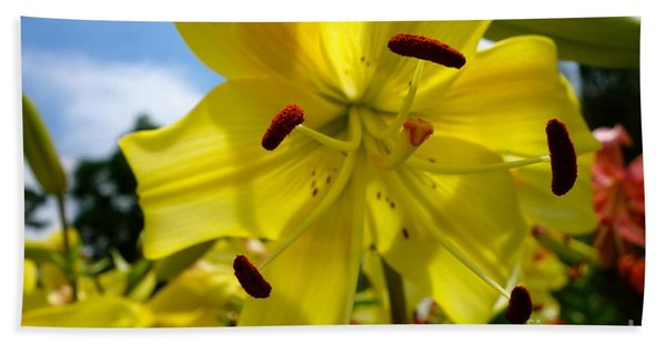Beach Towel featuring the photograph Yellow Whopper Lily 2 by Jacqueline Athmann