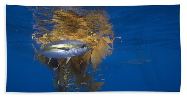 Yellowfin Tuna And Kelp Nine-mile Bank Beach Towel