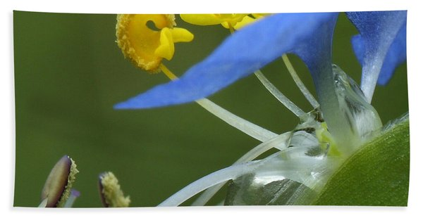 Close View Of Slender Dayflower Flower With Dew Beach Towel