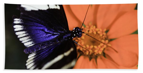 Blue And White Longwing Beach Sheet