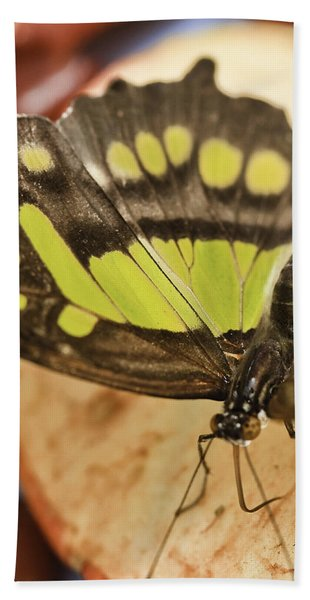 Malachite Butterfly Beach Sheet