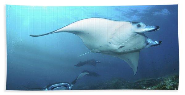 Manta Rays, Komodo, Indonesia Beach Towel