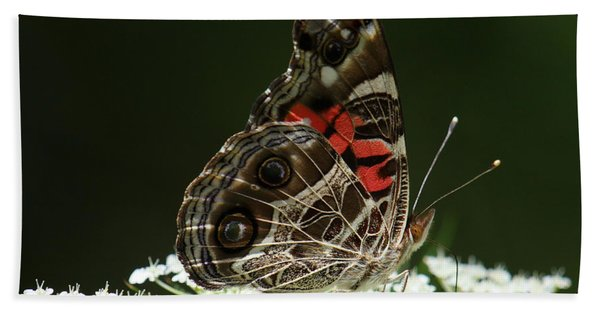 American Painted Lady Butterfly Beach Sheet