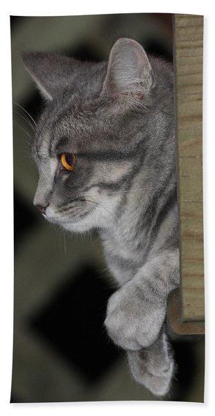 Cat On Steps Beach Sheet
