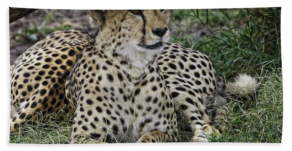 Cheetah Alert Beach Sheet