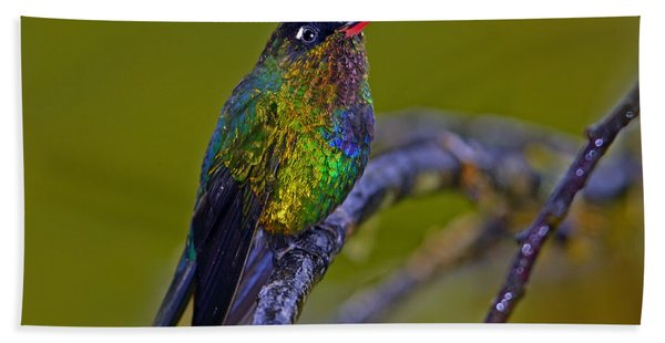 Fiery-throated Hummingbird Beach Towel