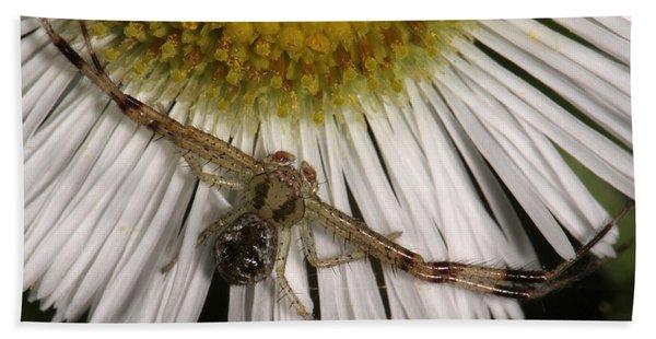 Flower Spider On Fleabane Beach Sheet
