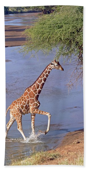 Giraffe Crossing Stream Beach Towel
