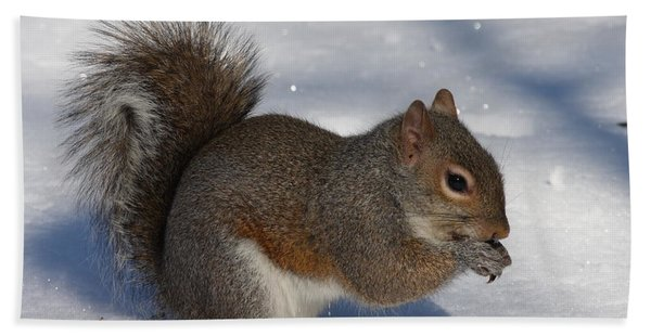 Gray Squirrel On Snow Beach Towel