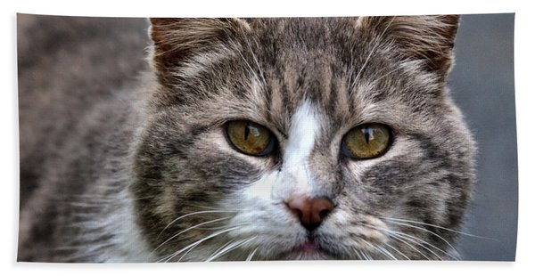Gray Tabby Tux Cat Beach Towel